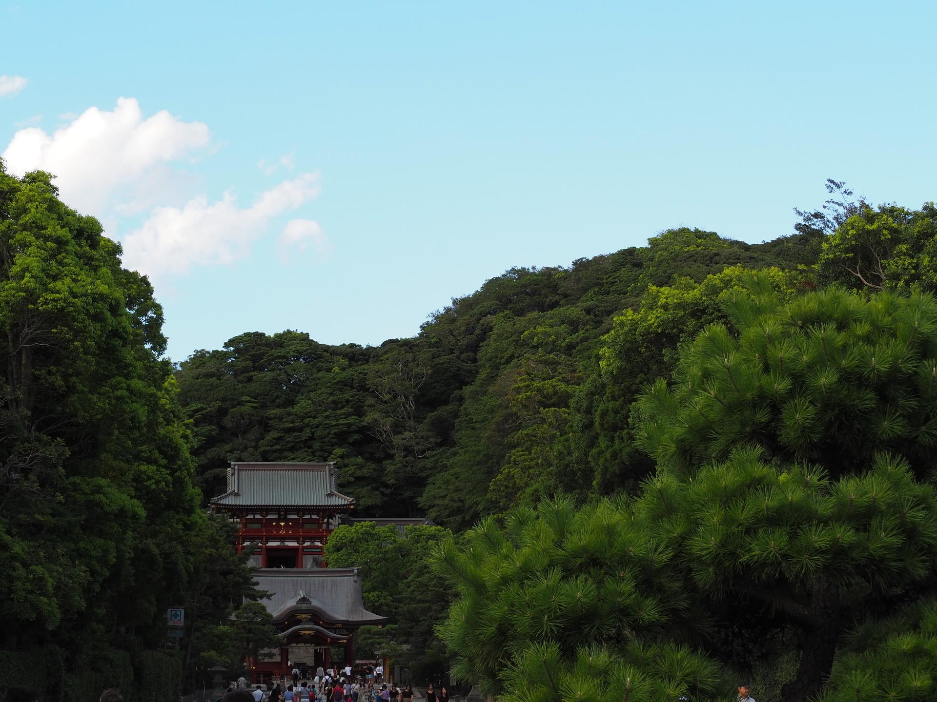 鎌倉P8170003.JPG