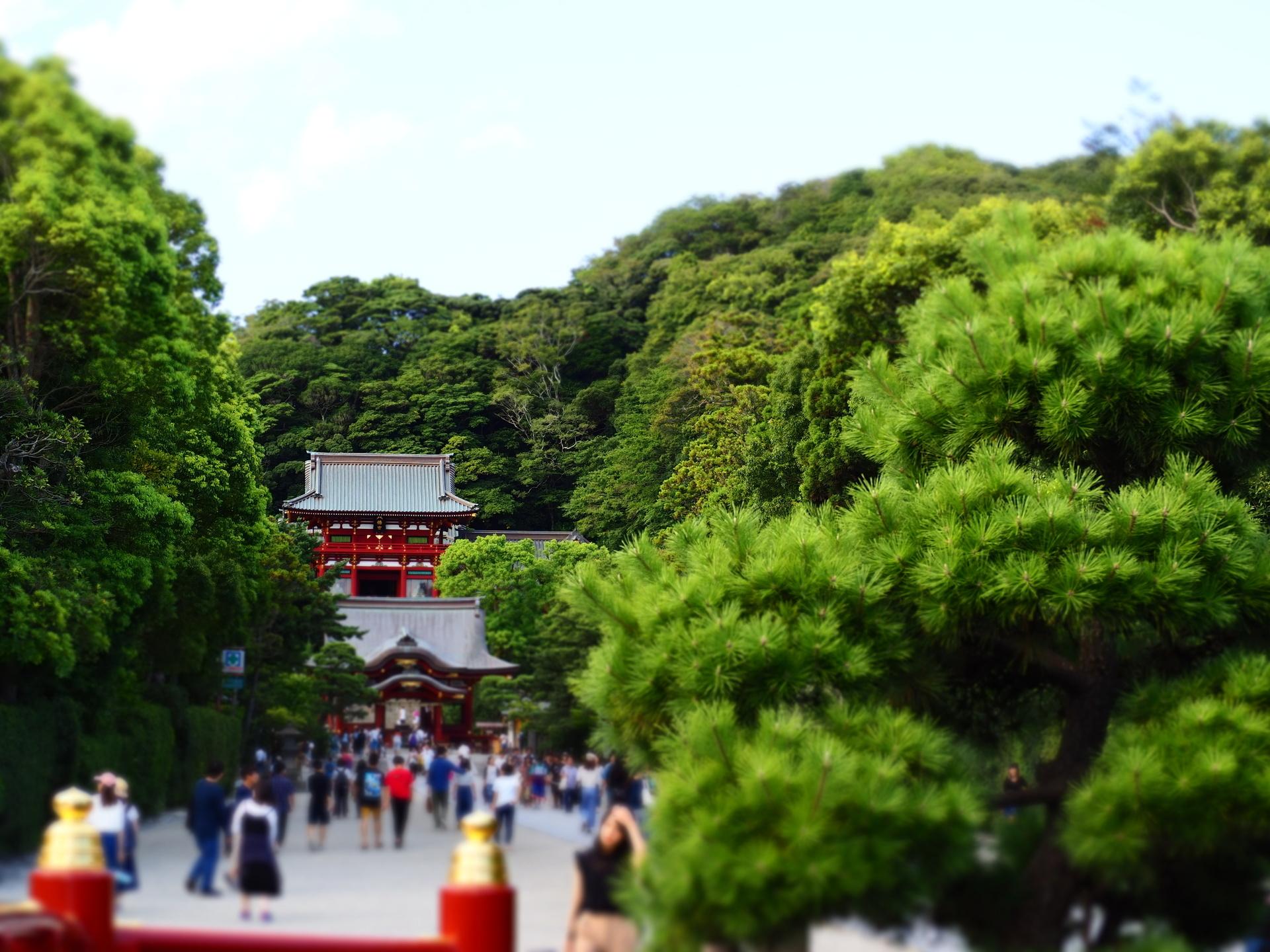 鎌倉P8170006.JPG